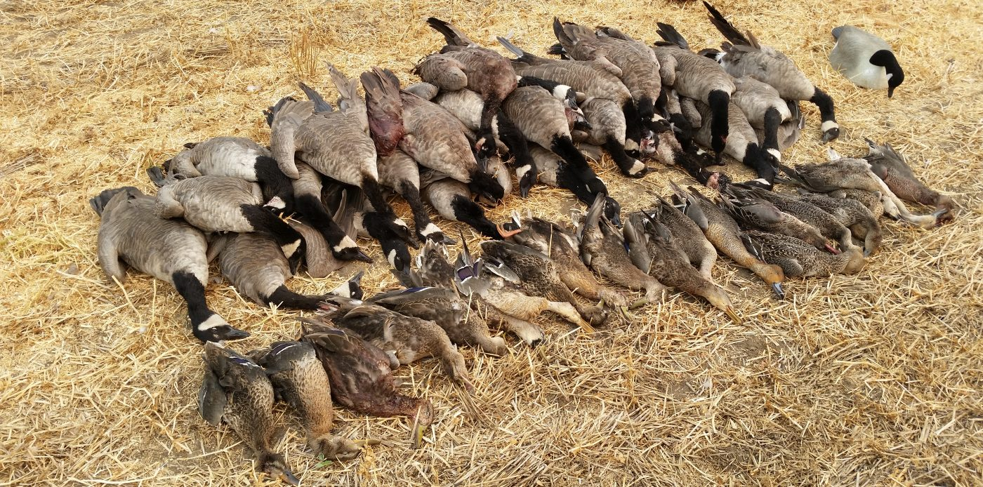 Waterfowl Hunting at its BEST